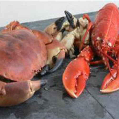 Cemaes Bay Lobster and Crab